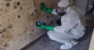 how to get rid of mold damage